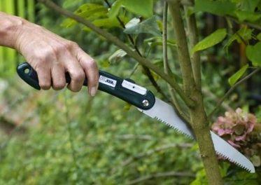 Soignez vos arbustes avec la scie arboricole !