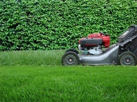 Comment avoir un beau jardin magnifique et verdoyant