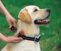 Pour bien dresser votre chien : Optez pour les colliers électriques !
