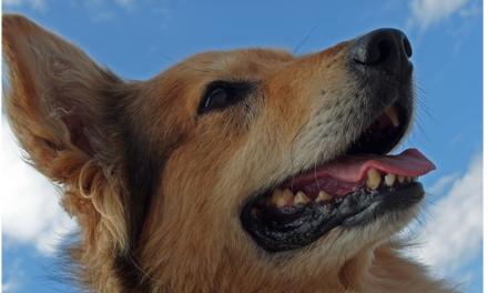 Où faire garder votre chien pendant vos vacances ?