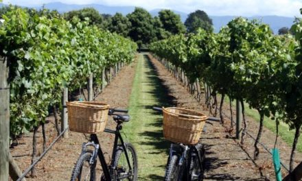 Découvrir les vignobles français à vélo