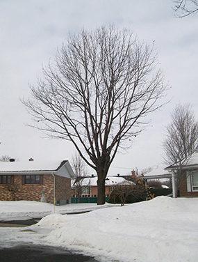 Quand doit-on faire élaguer un arbre?