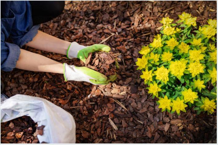 Différences entre paillage organique et minéral