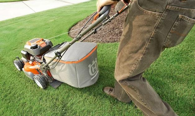 Les techniques d'entretien de la pelouse durant l'été